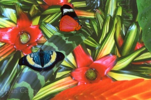 Jungle Bromiliads; butterfly fauna; South America