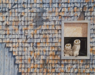 barn owl; Vermont